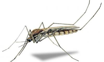 ako_sa_zbavit_komarov-2