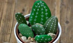 kaktusy z kamenov